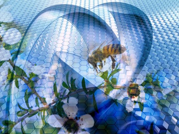 Mật ong hoa Manuka có đặc tính kháng virus và kháng khuẩn cực cao
