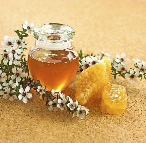 Mật ong manuka chứa chất kháng khuẩn cực mạnh