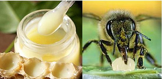 sữa ong chúa thật bị hơi chua và lợ, khé cổ và tan hết trong miệng